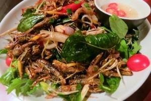 Manger des insectes biologiques est excellent pour la santé mais pour pour l'écosystème de la planète.